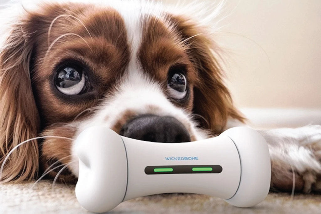 5 Essential Smart Dog Gadgets You Need Today