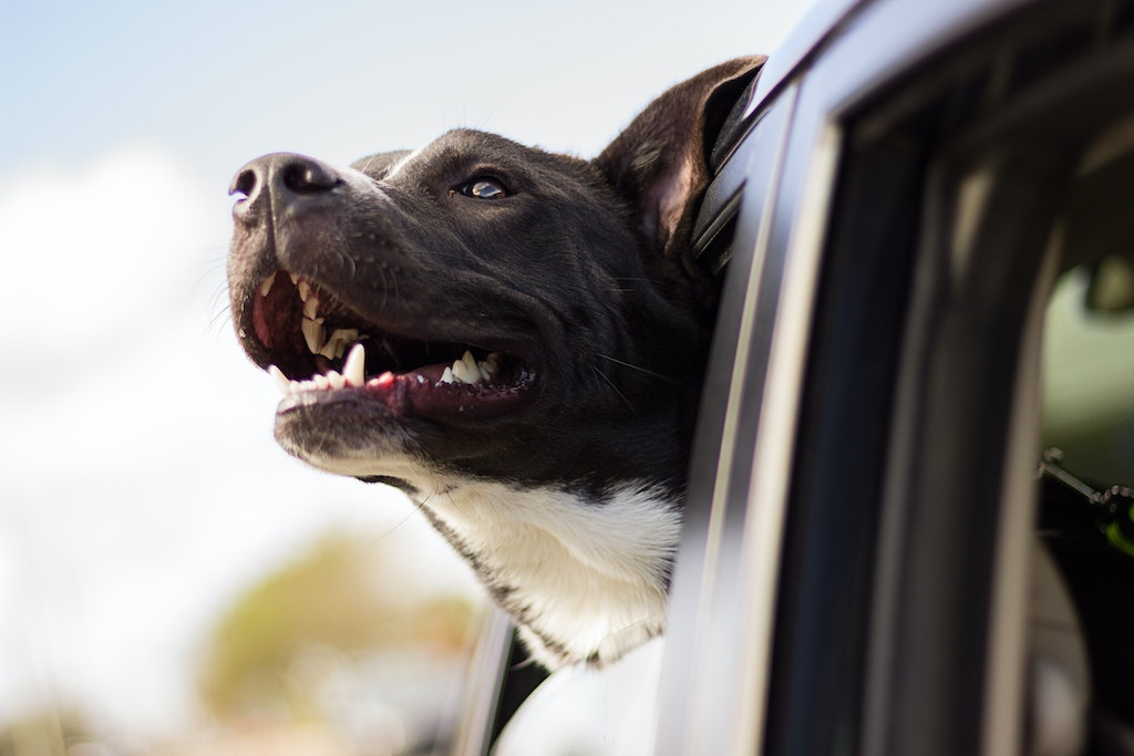 Dog Supplements to Boost Your Dog's Immune System