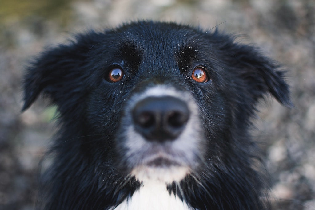 3 Easy Ways to Keep your Pup's Eyes Healthy