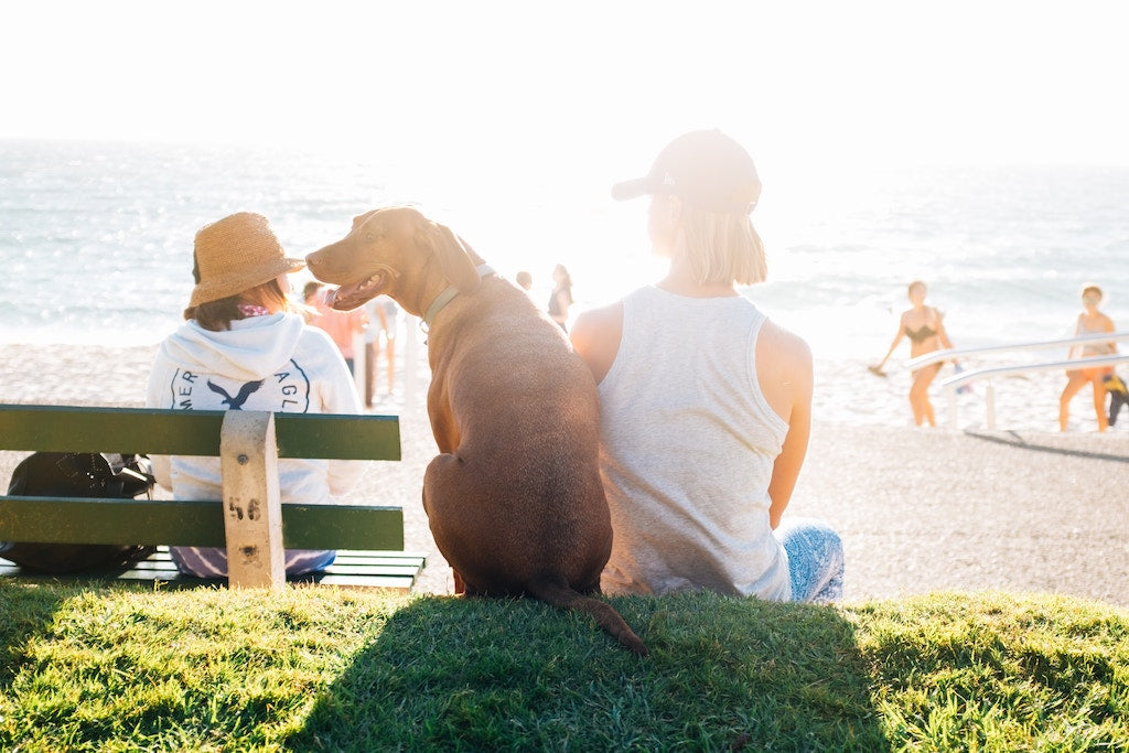 Everything You Need To Know To Adopt An Adult Dog