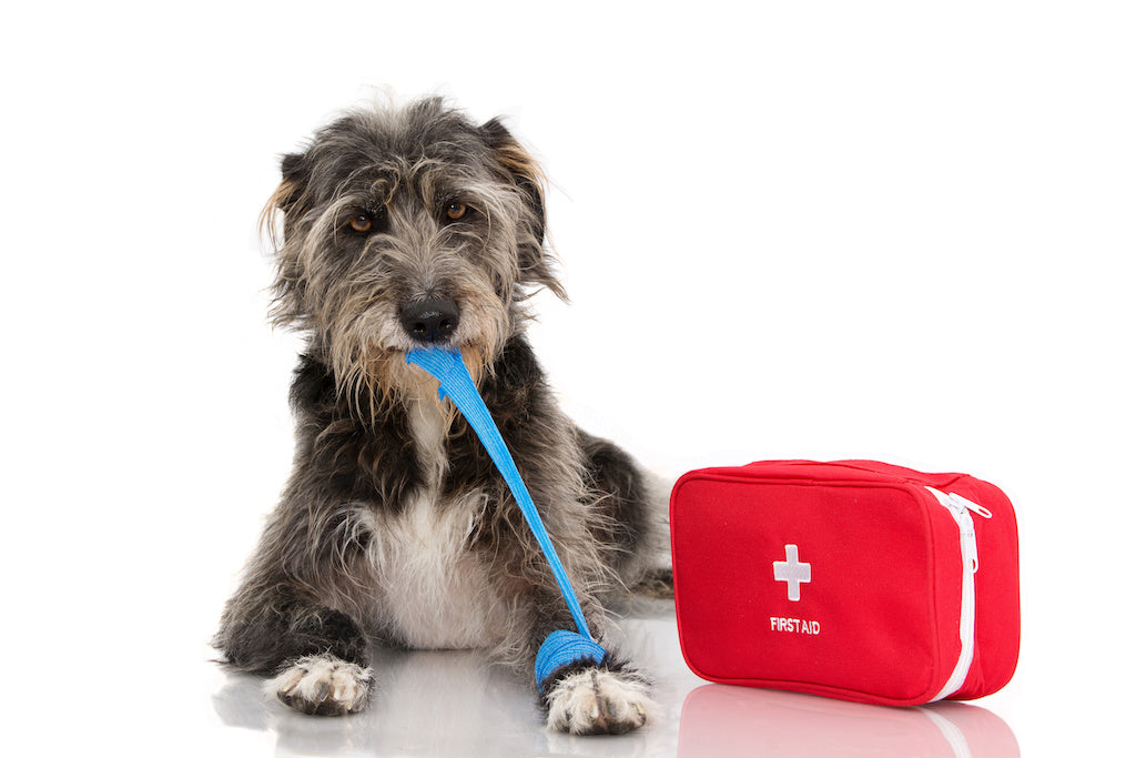 The Basics of Doggy First Aid Kits