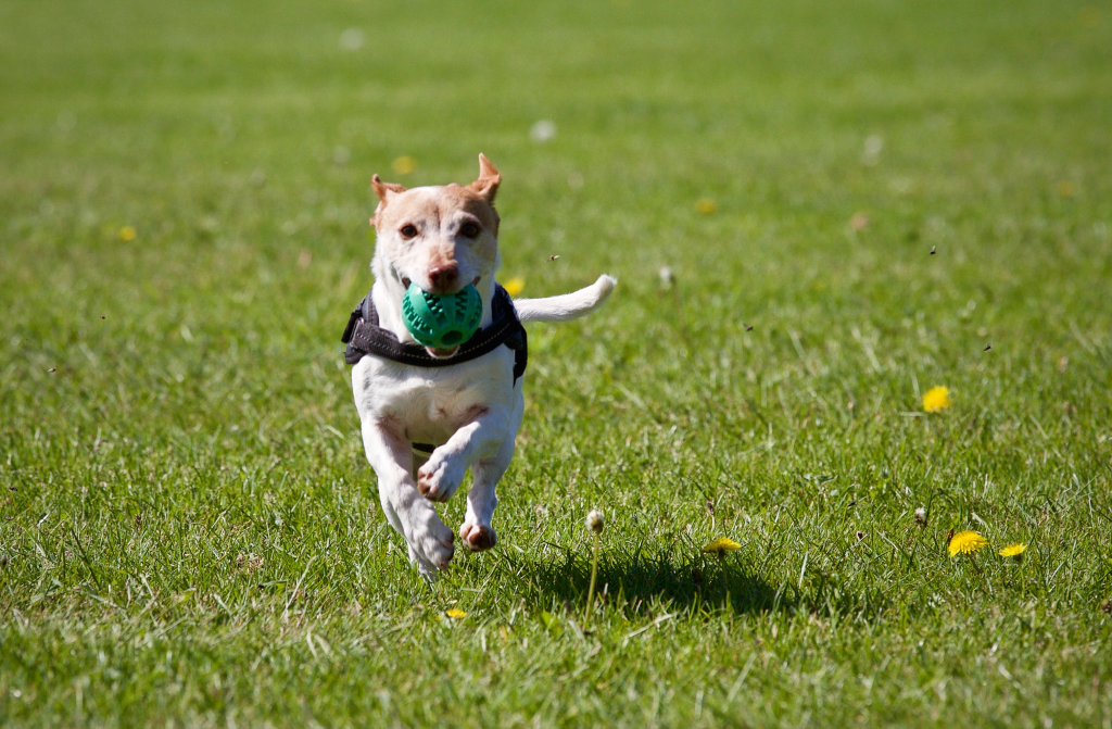 Types of Dog Obedience Training