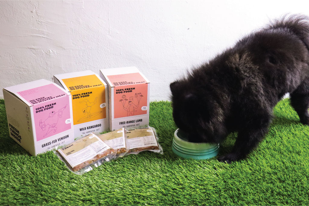 GDP Reviews: The Grateful Pet - Not just fresh, but super charged with super food!