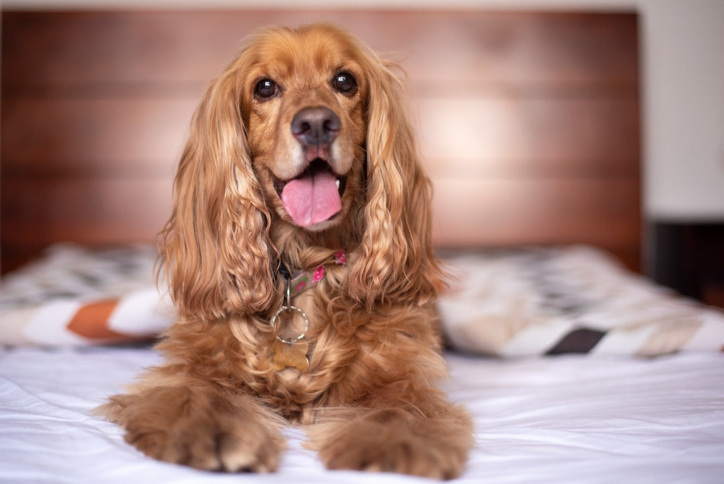 5 Tips for Managing Luxating Patella (Trick Knees) in Dogs