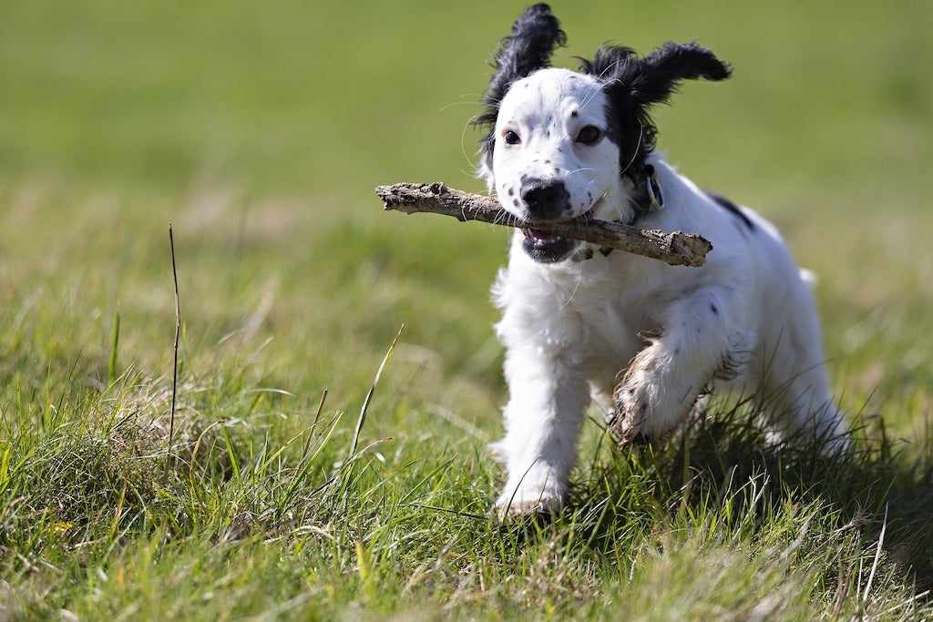 Hot Spots in Dogs: Prevention and Treatments