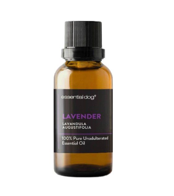 Essential Dog Pure Lavender Essential Oil