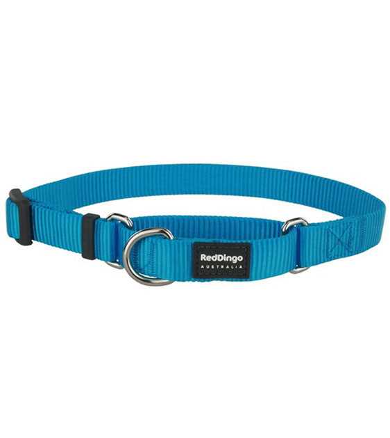 Red Dingo Martingale Choke Prevention Dog Collar (Turquoise)
