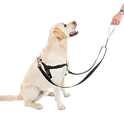 FREEDOM No-Pull Harness & Leash (Silver/Black) For Dogs
