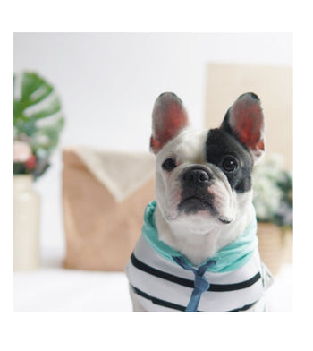 Ohpopdog Mint Striped Hoodie Dog Apparel