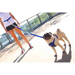 EzyDog Road Runner Zero Shock Dog Leash (8 Colors)
