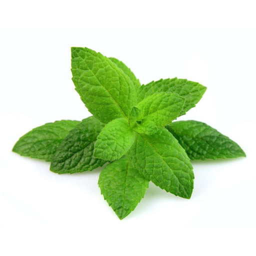 Inawera Fresh Mint - Steam E-Juice | The Steamery