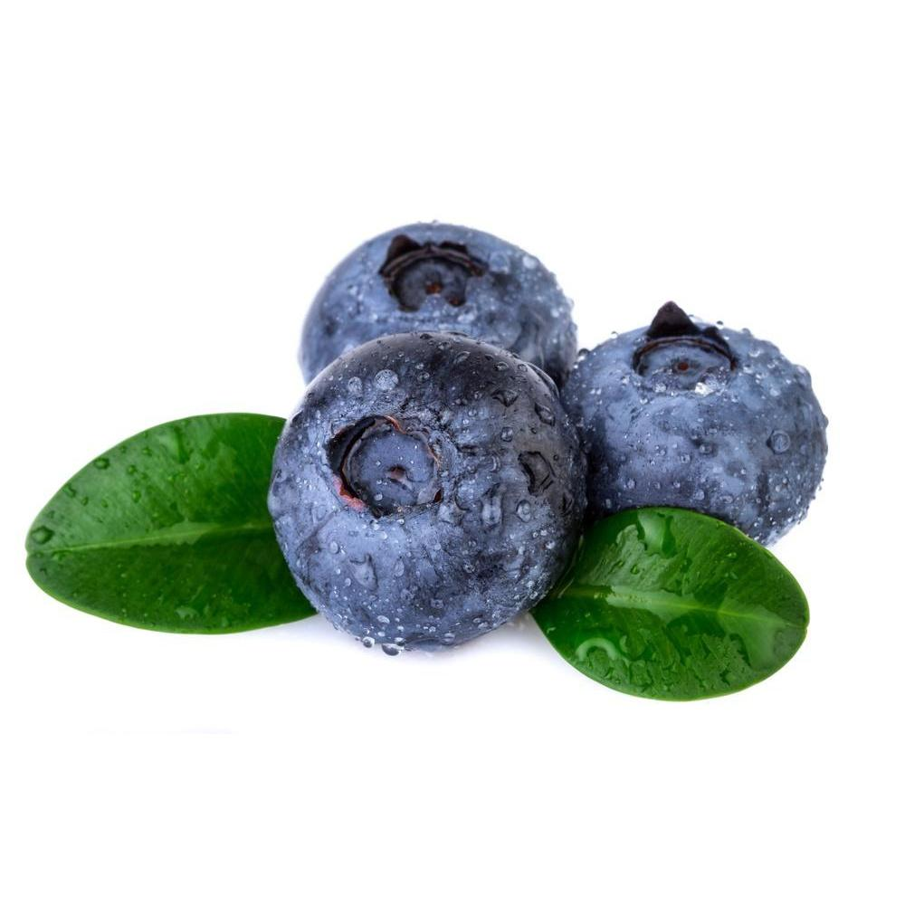 FLV Blueberry - Steam E-Juice | The Steamery