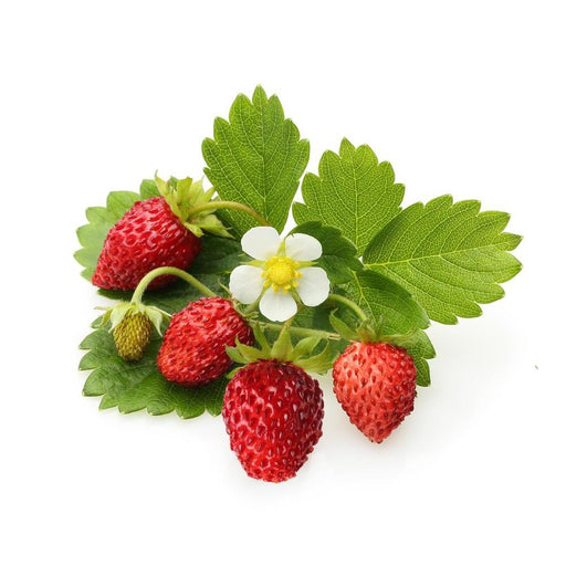 FLV Alpine Strawberry - Steam E-Juice | The Steamery
