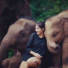 Travel to Thailand to play with Elephants