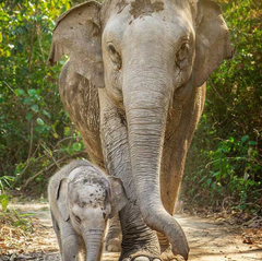 Best Travel Bucket list to see Elephants in Thailand