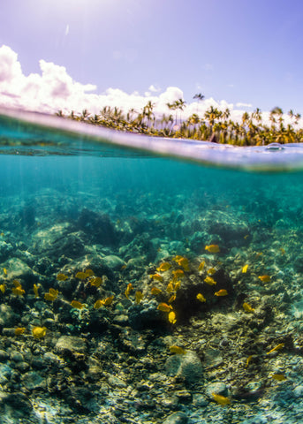 Things To Do Best Snorkel Beaches in Hawaii