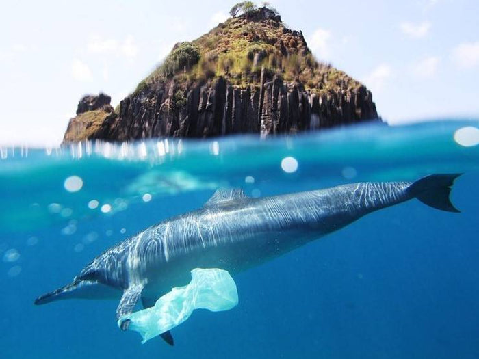 Scrap the Plastic Packaging