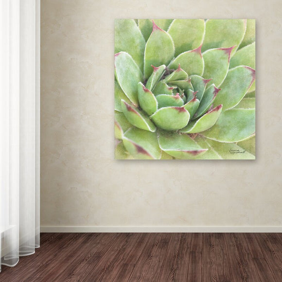Garden Succulents IV Color' Photographic Print on Wrapped Canvas