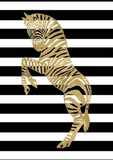 Zebra Black White Stripe' Poster Gallery Graphic Art