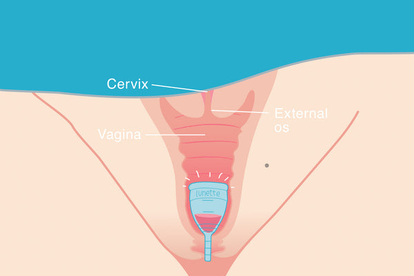 High cervix, low cervix and your menstrual cup
