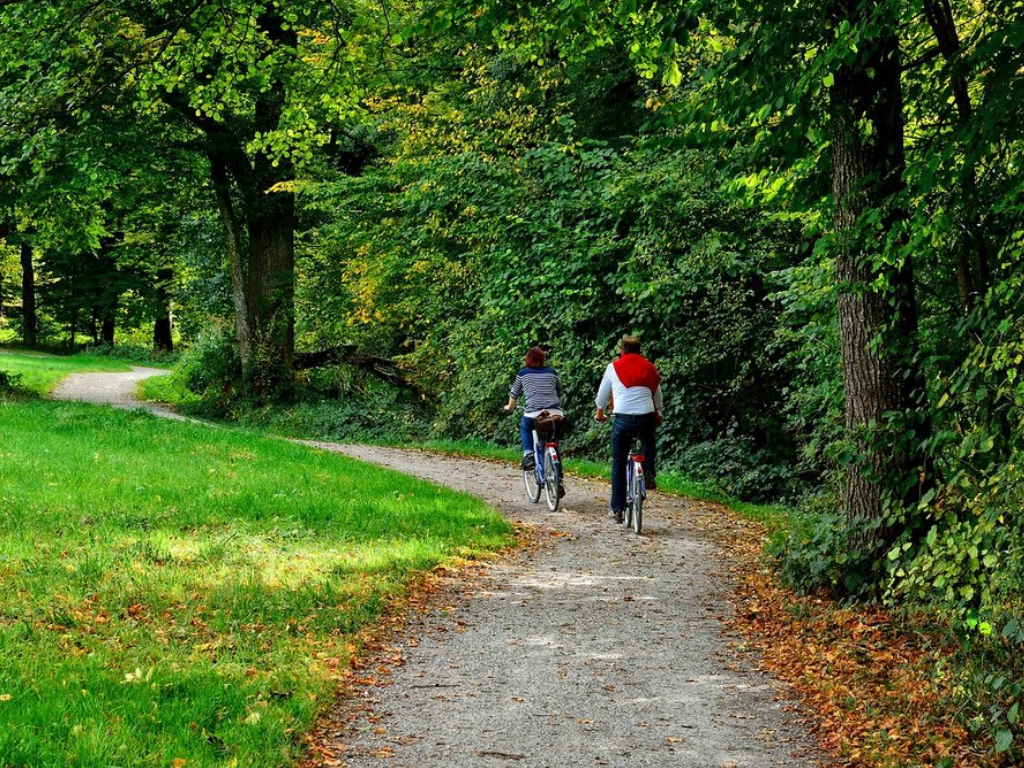 2 cyclists riding through forest trail
