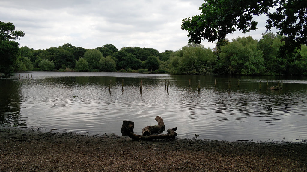 Epping Forest epping lake