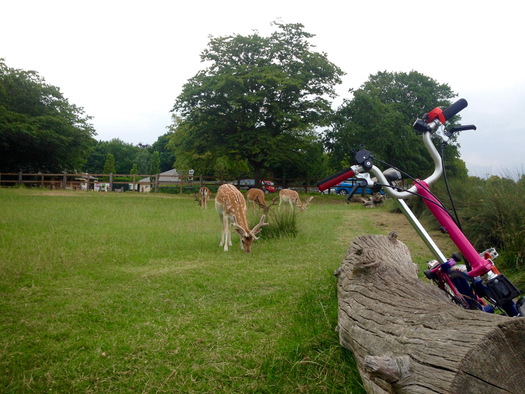 Richmond park's deers