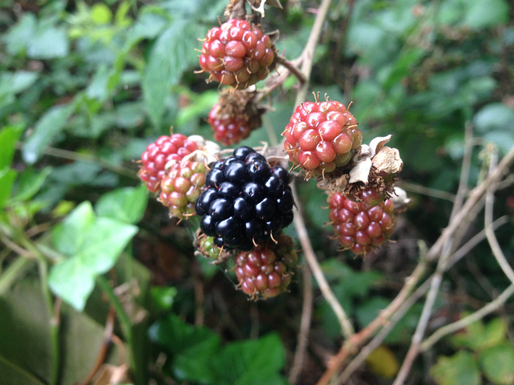 Blackberries on the road