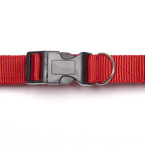Smarty Paws Dog Collars. Smart look for the smart dog