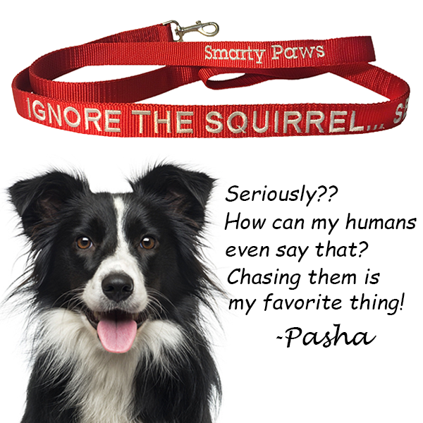 """Ignore The Squirrel...Seriously?"" The Dog Leash for the Squirrel Crazy Smarty Paws - The Smarty Paws"