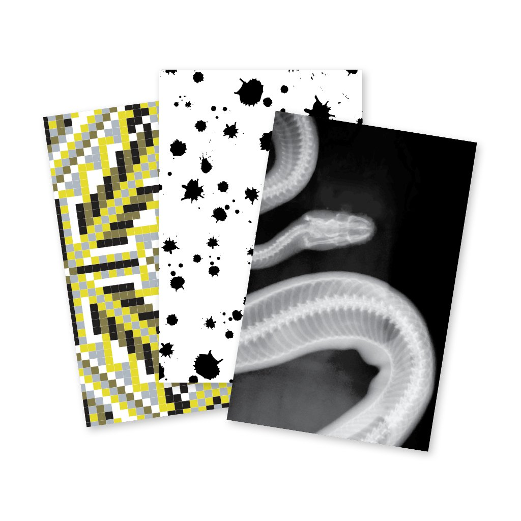 Wild Study | Notebook Trio: Tile, Splatter, Snake