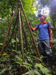 Amazon Rainforest lodge tour guide walking tree jungle peru
