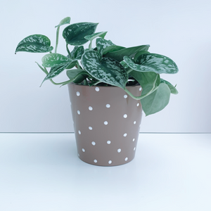 Hand Painted Beige And White Spot 13cm Ceramic Planter