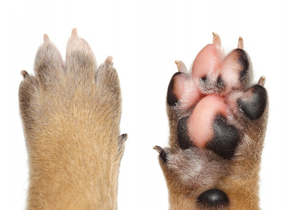 Clipping Your Dog's Nails
