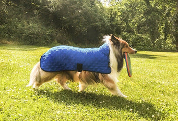 The Scoop on Derby Dog Coats' Hydro Cooling Jackets!