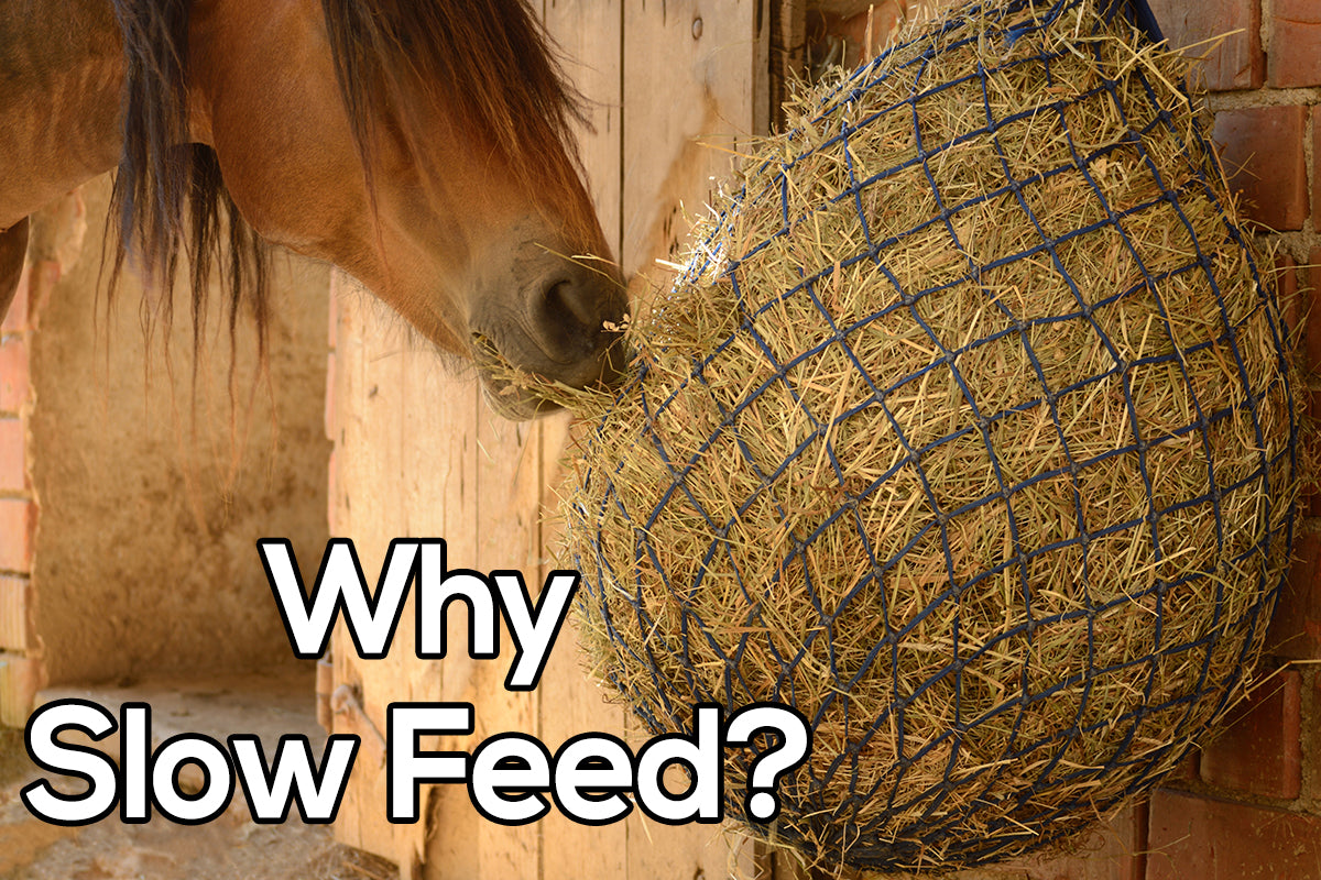 Why Feed Slow?