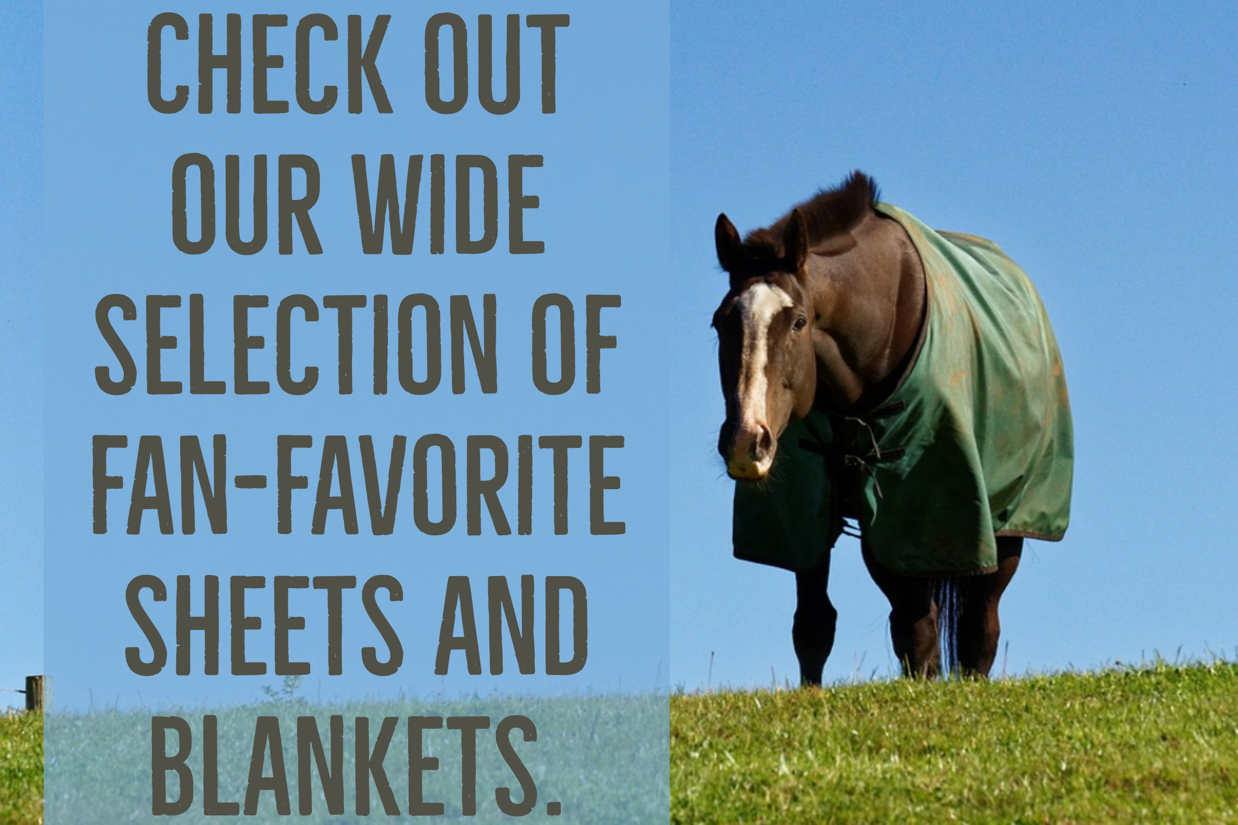 Quality Horse Tack At Wholesale Prices