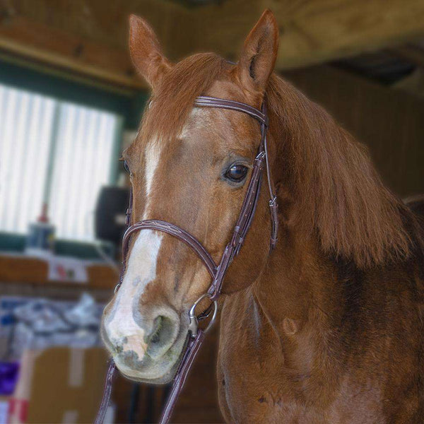 Paris Tack Classic Fancy Stitch Hunt Bridle with Laced Reins