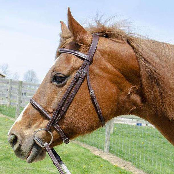 Derby Originals Everyday Raised Fancy Stitched Leather English Schooling Bridle with Laced Reins