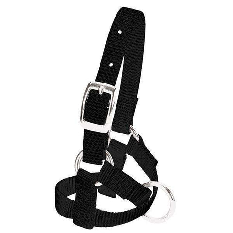 "Weaver Leather Alpaca Halter, 5/8"" Black Nylon"