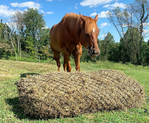 "Derby Originals 57"" Hankering Horse Slow Feed Poly Rope Hay Net  with 2x2"" Holes"
