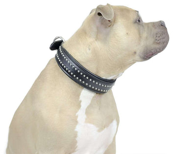Designer Bully Dog Collar Padded USA Leather Derby - Tack Wholesale