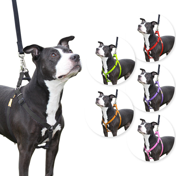 CuteNfuzzy Step in Dog Harness