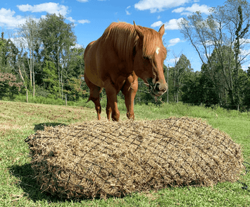 "Derby Originals 90"" Giant Slow Feed Hanging Hay Net for Horses"