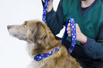 cuteNfuzzy® Padded Adjustable Dog Collar with Overlay Warranty - Tack Wholesale