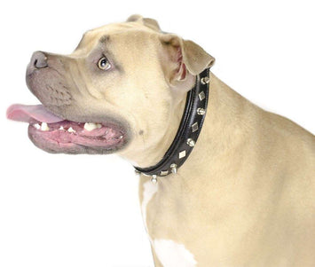 Designer Spikes & Diamond Padded Dog Collar USA Leather 50% Off - Tack Wholesale