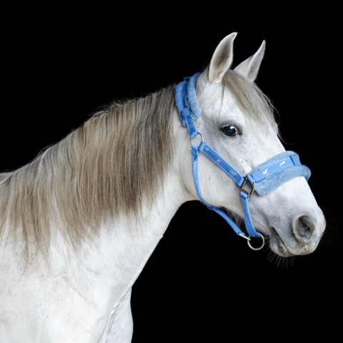 Derby Originals Premium Fleece Padded Nylon Horse Halter with Decorative Silver Horse Print - Available in 8 Sizes and 5 Fun Colors