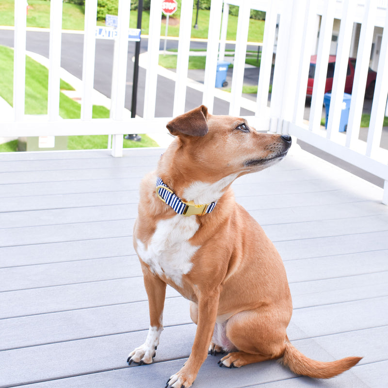 THE ANDES DOG COLLAR AND BOW TIE