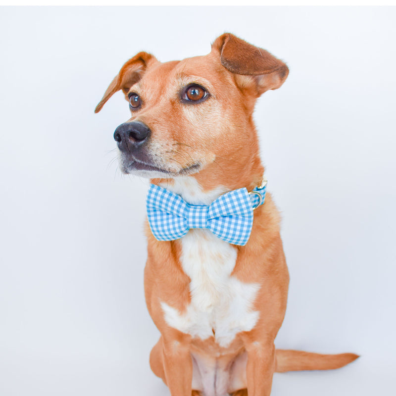 AQUA GINGHAM DOG COLLAR AND BOW TIE SET