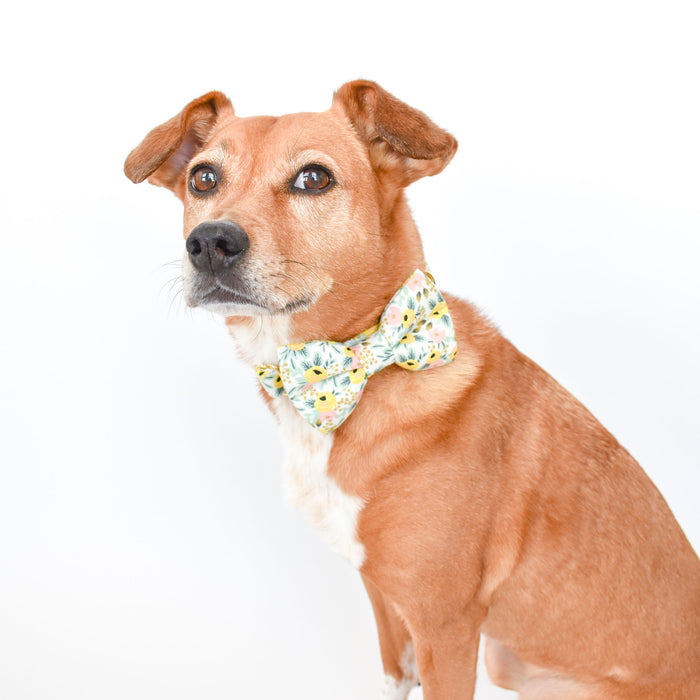 The Olive Dog Bow Tie